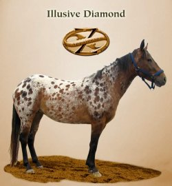 Illusive Diamond