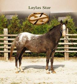 Laylas Star