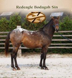 Redeagle Bodegah Sin