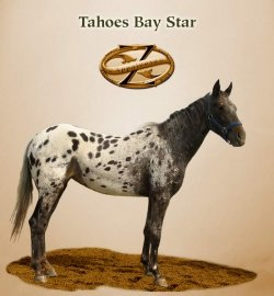 Tahoes Bay Star