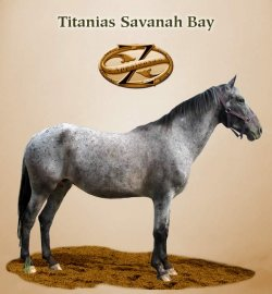 Titanias Savanah Bay