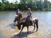 Pferde auf dem Damm