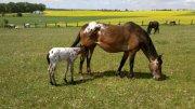 New mare