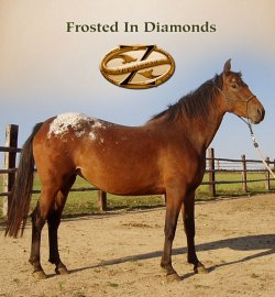 Frosted In Diamonds