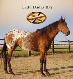 Lady Dadra Bay