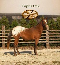 Laylas Oak