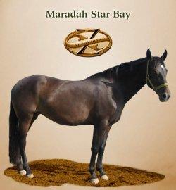 Maradah Star Bay