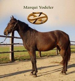 Marqui Yodeler