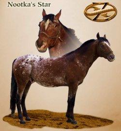 Nootka's Star